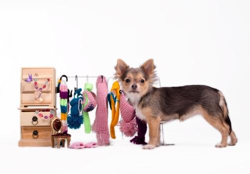 vestiti-cane