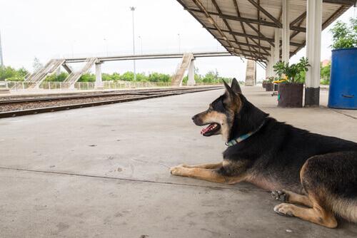 Malchik, la storia di un cane abbandonato