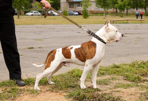 cane-al-guinzaglio