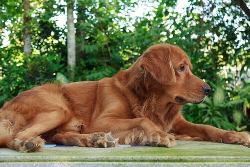 cane-anziano-2