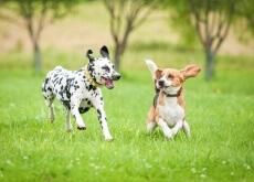cane-che-salta