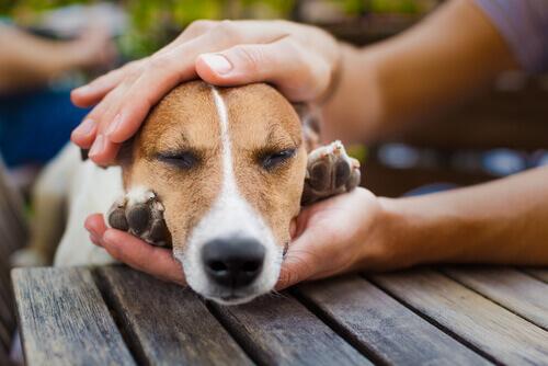 I cani ci regalano il loro cuore