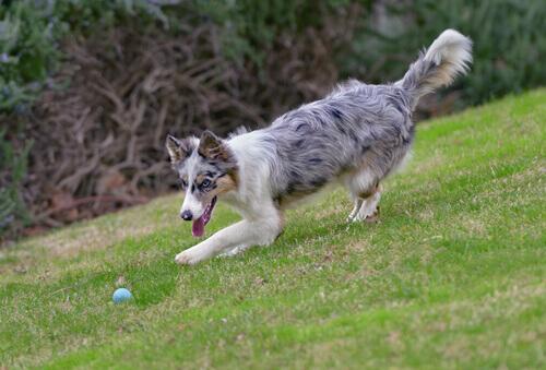 cane-gioco-del-riporto