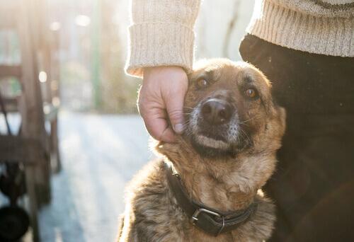padrone accarezza cane sul muso