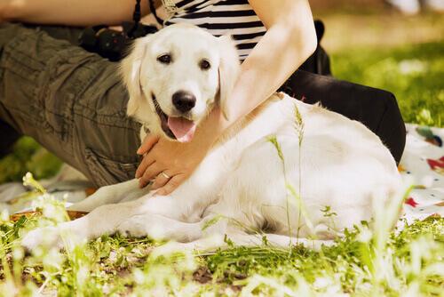 I cani portano la felicità