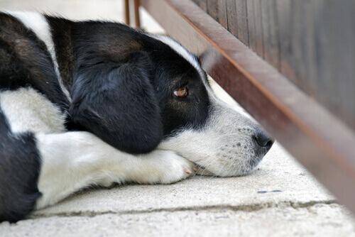 Come trattare la paura dei rumori forti nei cani