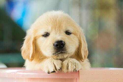 cane-triste