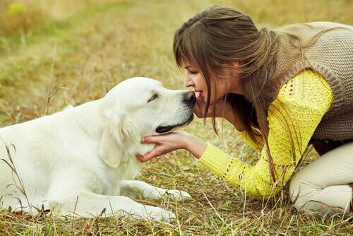 cane-trova-casa