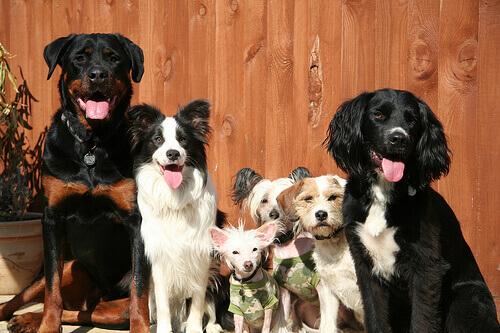 Wan Yan, il milionario che salva migliaia di cani
