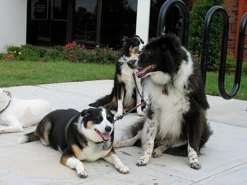 Adottare un cane, il segreto della felicità