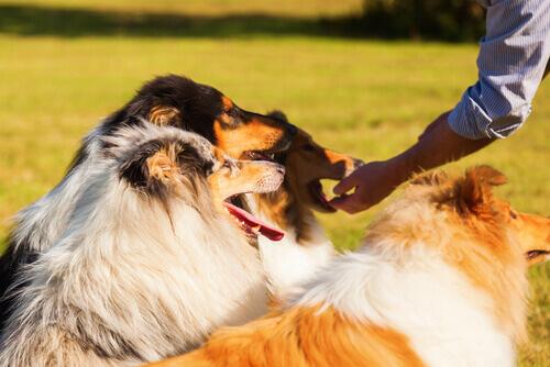 Alimentazione del cane: qual'è la frequenza ideale?
