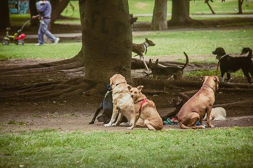 cani-in-strada