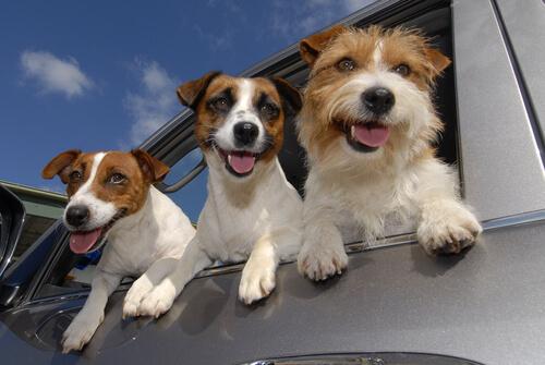 Sapevate che i cani possono essere mancini?