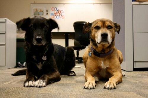 Cani molto civilizzati