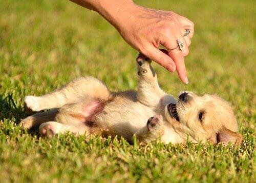 Consigli per crescere un cucciolo sano