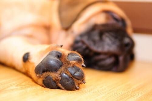 cuscinetti-del-cane