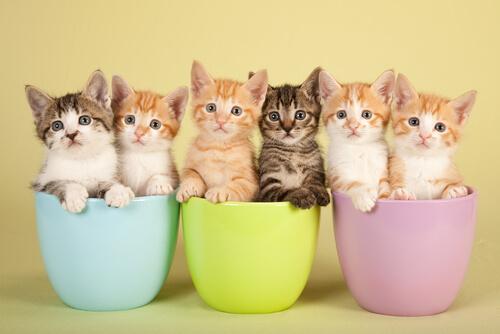 Il mantello dei gatti