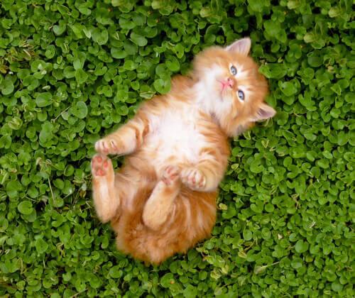 Sbarazzatevi dei pregiudizi e adottate un gatto