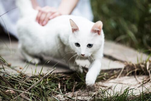 5 ragioni per innamorarsi dei gatti