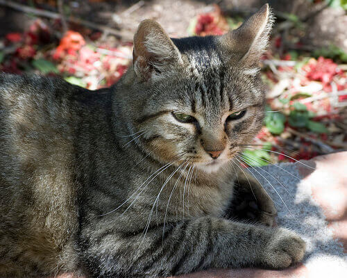 Azienda giapponese adotta gatti per gli impiegati