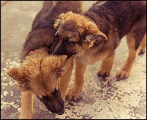 Litigio tra cani