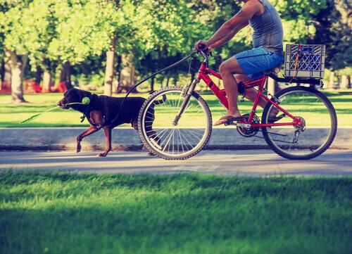 10 comportamenti irresponsabili di chi possiede un cane