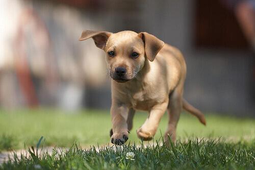 Giochi per stimolare l'udito del cane
