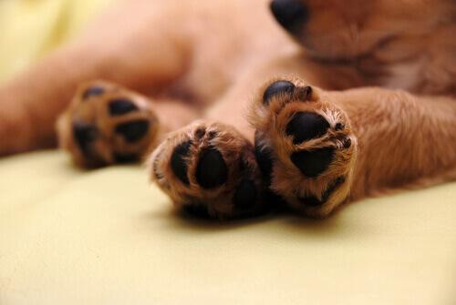 Curiosità sulle zampe del cane