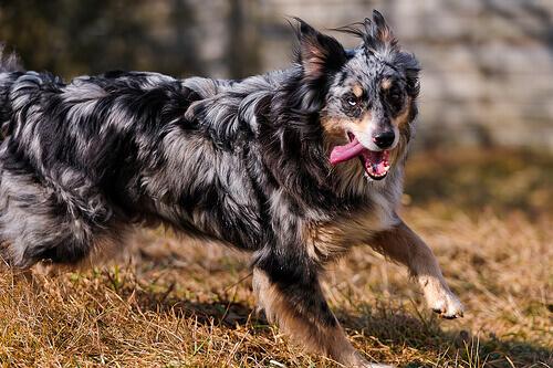 5 cose che il cane ama inseguire