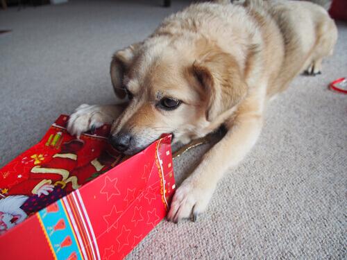 avvelenamento-nei-cani
