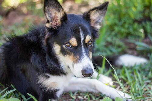 cane senza nome