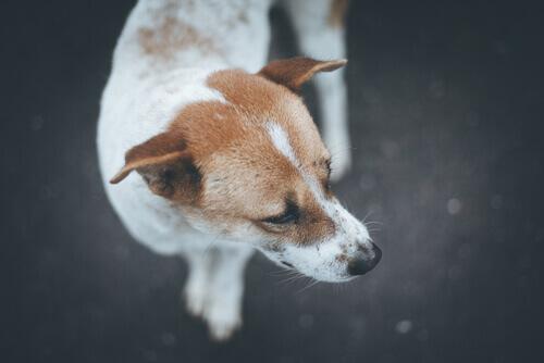 cane-abandonato