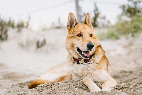 La sorprendente storia di Arthur, il cane atleta