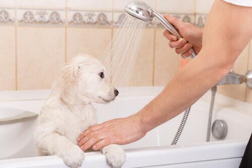 cucciolo nella vasca fa il bagno