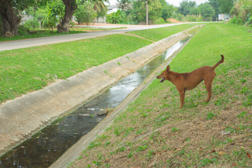 Indagata la donna che gettò un cane nel canale