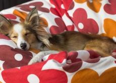 abituare il cane a dormire da solo