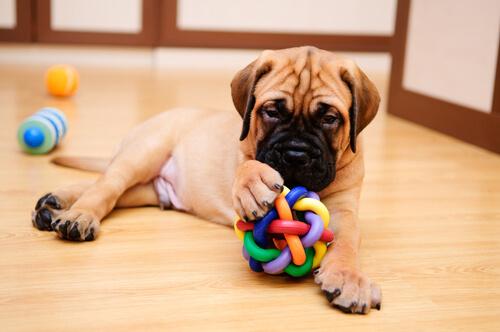 cucciolo gioca sul pavimento con pallina colorata