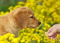 cane-che-mangia-biscotto