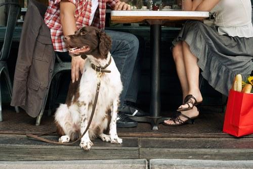 cane bianco e marrone seduto