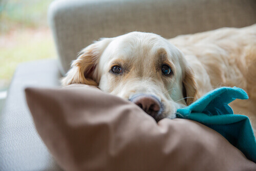 I cani amano dormire sotto le coperte