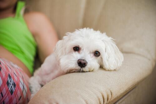 Dormire con un animale aiuta a conciliare il sonno