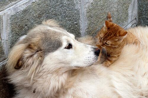 Il vostro animale ha bisogno di una terapia?