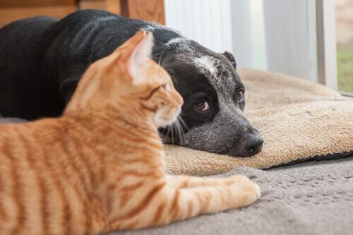 I gatti sono più longevi dei cani