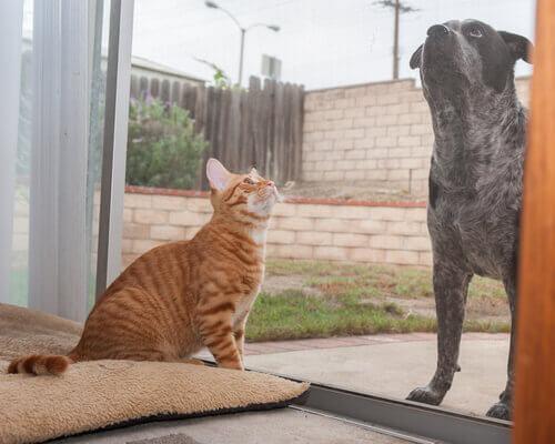 cani e gatti prevedono i terremoti