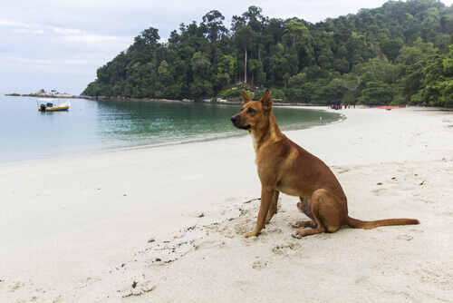 Il cane, il vostro miglior compagno di viaggio