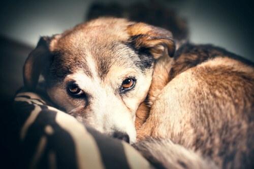 Avete un cane pauroso? Leggete questo articolo!