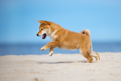 cane-salta giocando