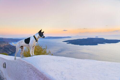 cane in viaggio al mare