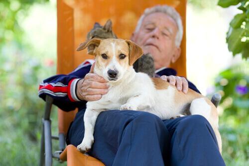 cane-uomo