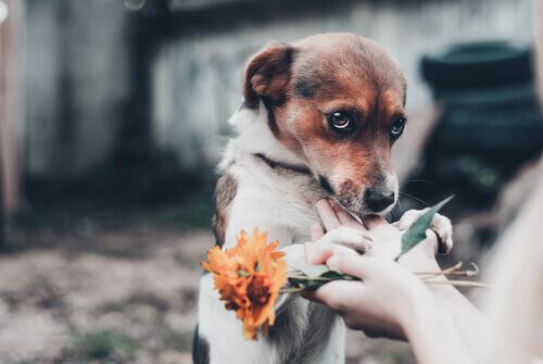 Cani che hanno paura delle persone